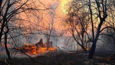 Полиция рассматривает две версии возникновения пожаров в Житомирщине