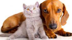 В Минюсте пообещали больше не продавать домашних животных