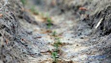 В Украине на участках срубов высадили молодые деревья - Гослесагентство