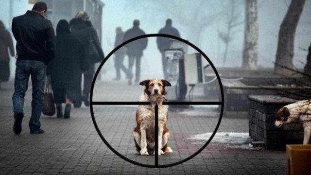 Под Киевом опасные догхантеры открыли сезон охоты на собак и котов
