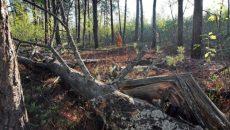 ГБР подозревает в незаконной вырубке леса на Львовщине шесть человек