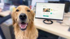 Стартап OneDegree запустил первый продукт по медстрахованию животных
