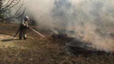 Житомирщина подсчитала убытки от лесных пожаров весной