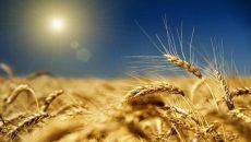 Минэкономики презентовало концепцию поддержки аграриев