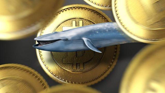 Стартап Snappa вложил 40% финансовых резервов в биткоин