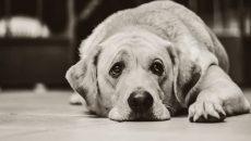 В Украине зафиксировано свыше 200 случаев жестокого обращения с животными