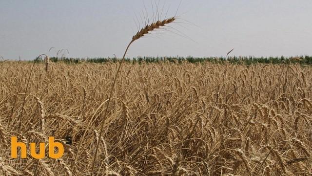 В Украине сократились запасы зерна - Госстат