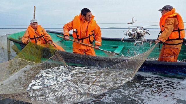 Украина увеличила экспорт рыбы на 23%