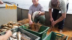 Украина в июле увеличила экспорт готовой и консервированной рыбы