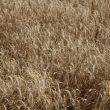Аграрии уже собрали 47,4 млн тонн зерна