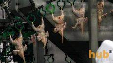 ЕС ограничил импорт мяса птицы из Украины
