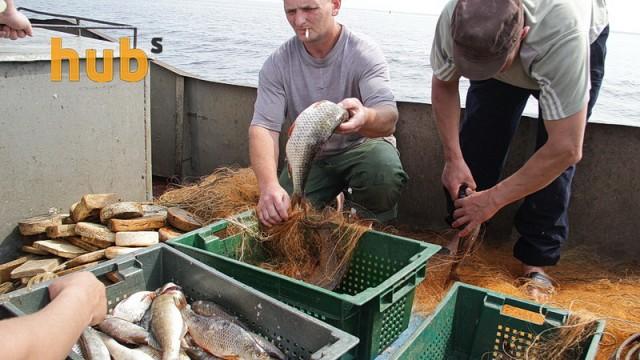 В Украине сократился вылов рыбы