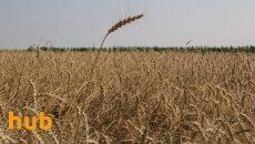 Рада снизила ставку НДС для аграриев