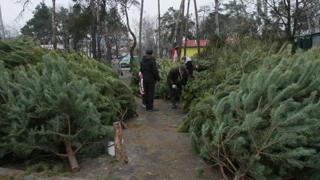 В Украине усилят охрану хвойных насаждений