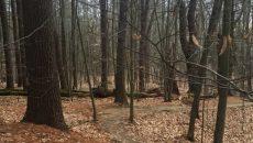 Возле леса нашли тело прокурора ОГП Котенко