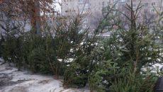 Госэкоинспекция оштрафовала 177 человек за незаконную торговлю новогодними елками