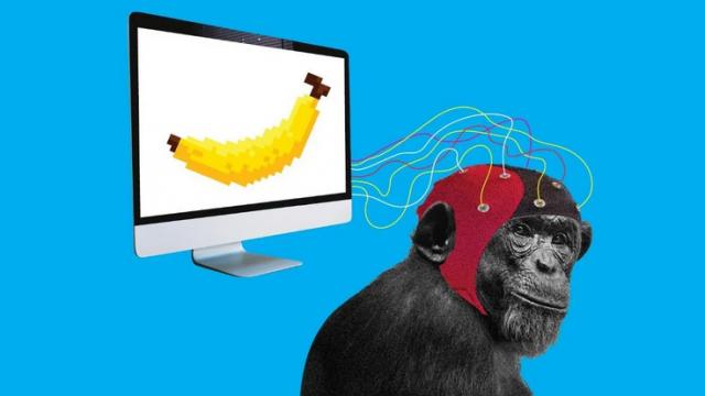 Стартап Маска научил обезьяну играть в компьютерные игры