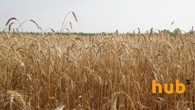Украина экспортировала более 28,7 млн тонн зерновых