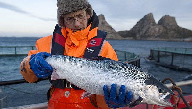 Норвегия является основным импортером рыбы в Украину