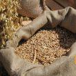 Минэкономики спрогнозировало рекордный урожай зерновых