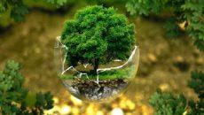 Экологии Украины нанесен ущерб на свыше 2 млрд гривен - Госэкоинспекция