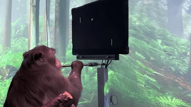 Стартап Neuralink Илона Маска показал обезьяну с вживленным чипом