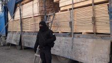 СБУ разоблачила схему нелегального экспорта карпатской ели