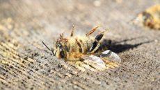 Укрпочта уморила 8 млн пчел