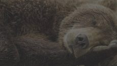 УЗ нашла у себя на балансе двух медведей