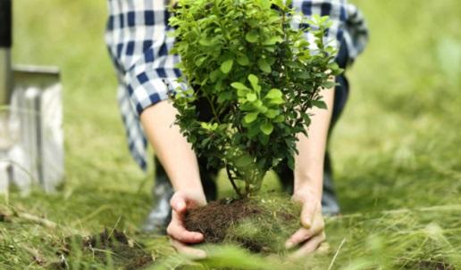 В Киеве в этом году высадили почти 3 тысячи деревьев