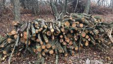 ГБР блокировало незаконную вырубку лесов
