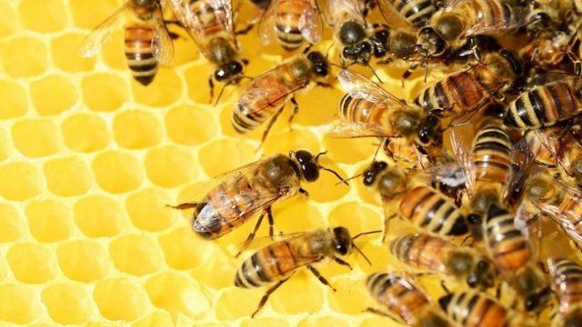 Украинский мед выходит на рынок Катара - Госпродпотребслужба