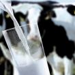 В Украине прогнозируют дефицит молока-сырья