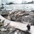 Украинские ученые установили возраст скелета кита из Антарктиды
