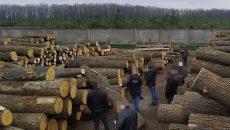 В Украине с начала года осудили более 40 человек за незаконную продажу лесных ресурсов - СБУ