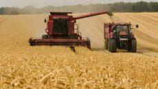 Украина в 2022 году рискует остаться без урожая: на что следует обратить внимание правительству