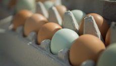 Украина впервые импортировала яйца из Беларуси