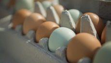В Украине производство яиц упало с начала года на 14% – Госстат